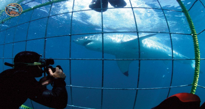 Shark cage diving tour.